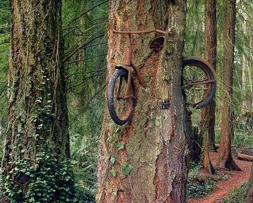 bicicletaenarbol.jpg