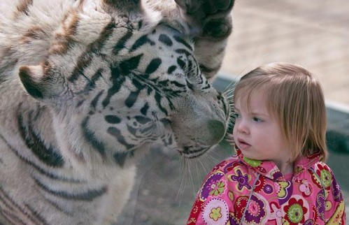 tigre-nina