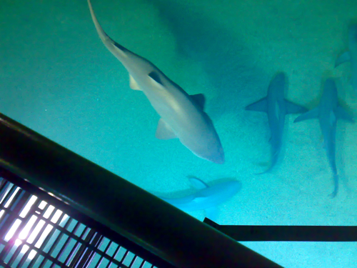 nomaders-valencia-tiburon